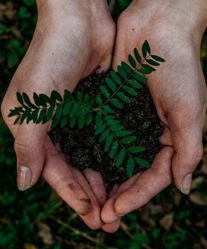 3 Million Tree in 3 Years
