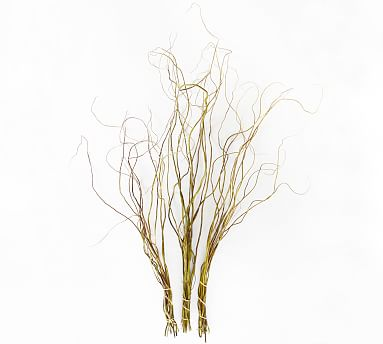 Live Curly Willow Branches 3 Bunches Pottery Barn