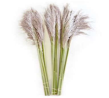 Live Pampas Grass 3 Bunches Pottery Barn