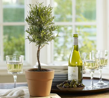 Live Rosemary Topiary Pottery Barn