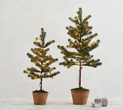 Tree Collar Shop All Christmas Pottery Barn