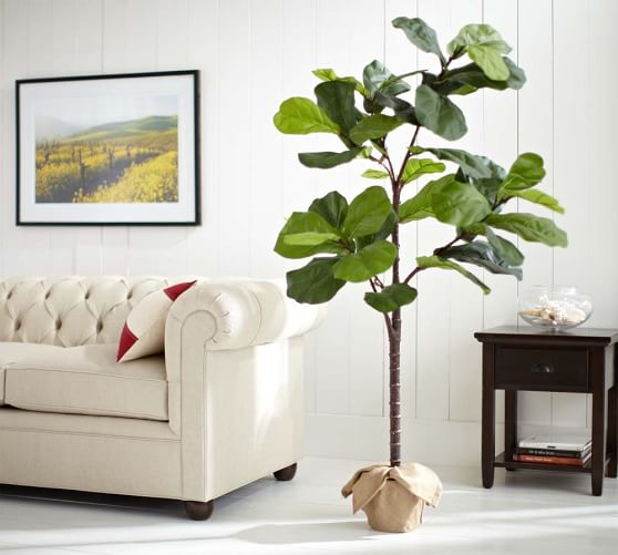 Faux Potted Fiddle Leaf Fig Trees Pottery Barn