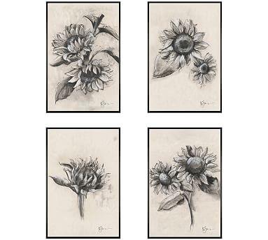 Charcoal Sunflower Sketch Framed Prints Pottery Barn