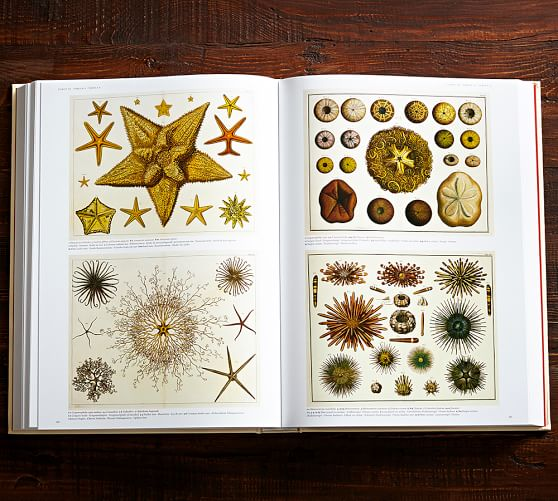 Cabinet Of Natural Curiosities By Albertus Seba Pottery Barn