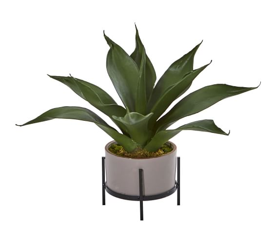 Faux Agave Succulent In Decorative Planter Pottery Barn