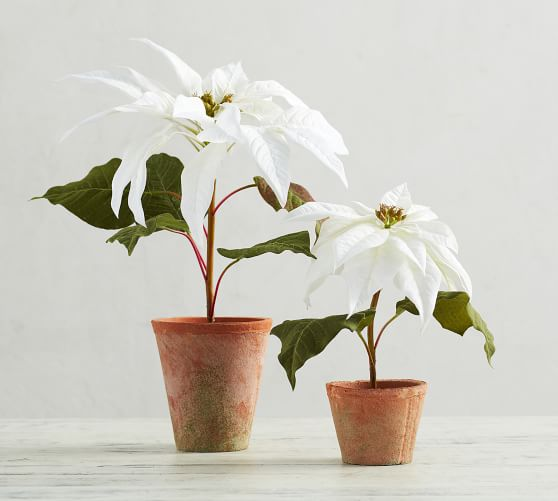 Vintage Plastic Small White Poinsettias 6
