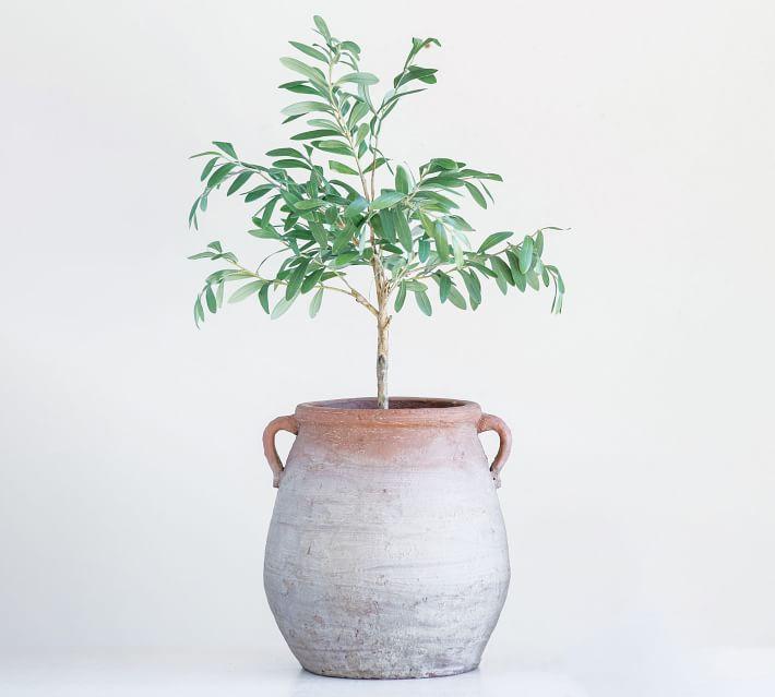 Aged Terracotta Urn