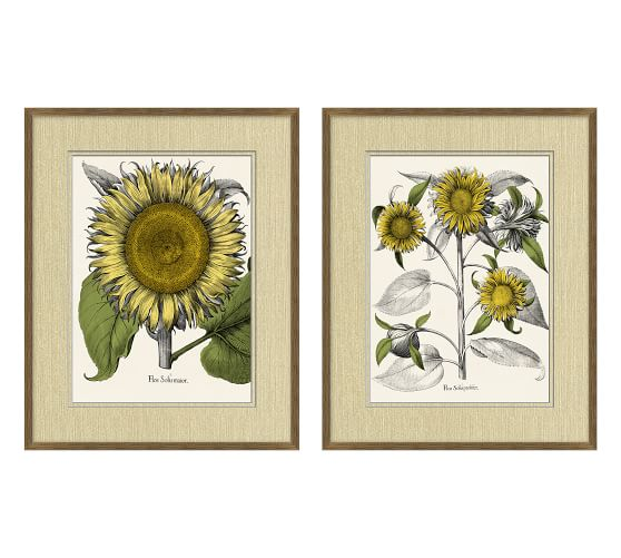 Tinted Sunflower Paper Print Pottery Barn